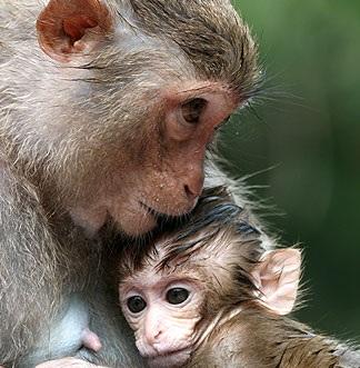 monkeys_emotion